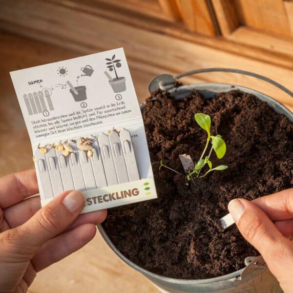 Grüne Geschenke - e-typisch -Streichholzgarten Kräuter-Steckling
