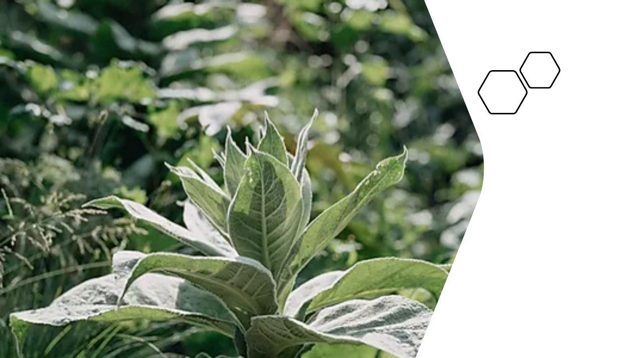 Biologischer Wildkräuterextrakt-Wohl 7,93€/100ml - Inhalt 150ml 3
