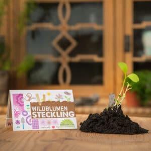 Grüne Geschenke - Streichholzgarten Wildblumen