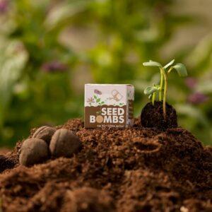 Grüne Geschenke - e-typisch- seedbombs in würfeln