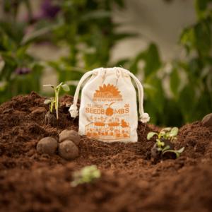 Grüne Geschenke - Seedbomgs Topfbälle - Niedrigwachsende Blumen