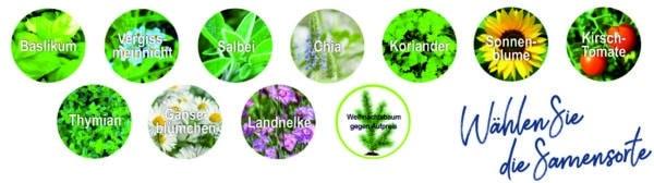 Farbstift mit Samenspitze- deutsche Samensorte 1